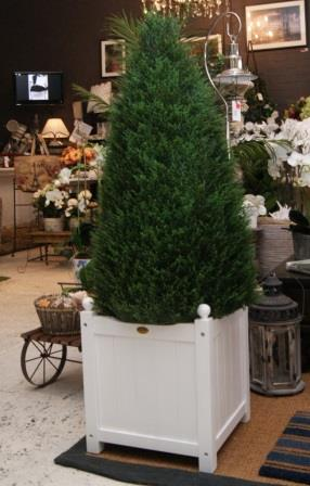 Faux cypress cone tree in white planter box